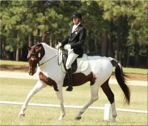 Lord Baltimore - by Lord Sinclair out of MMB GOV / Old NA mare Fancy Ruler