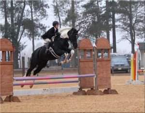 Sandro D  with Danielle Veasy at the Carolina Horse Park