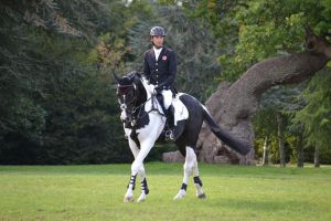 Commander - Pinto Olderburg Stallion - with Alex a -Blenheim.