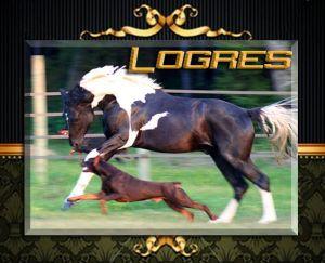 Sandro D running with Ch. Logres' Titanium