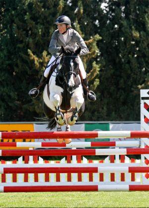 Commander Pinto Oldenburg Stallion in Feb 2011